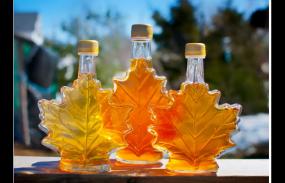 加拿大移民部宣布:芝麻信用报告可做签证财力证明!